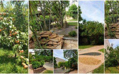 Un jardin thérapeutique qui porte du fruit !